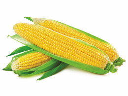 Canned sweet corn Food Garden 2950 g/1840 g